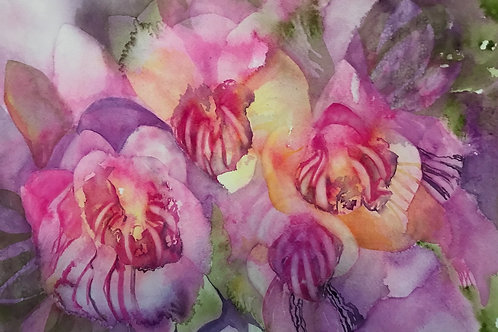 Funky Orchids  Watercolor Giclee