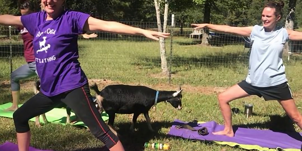More Goat Yoga Coming Soon!