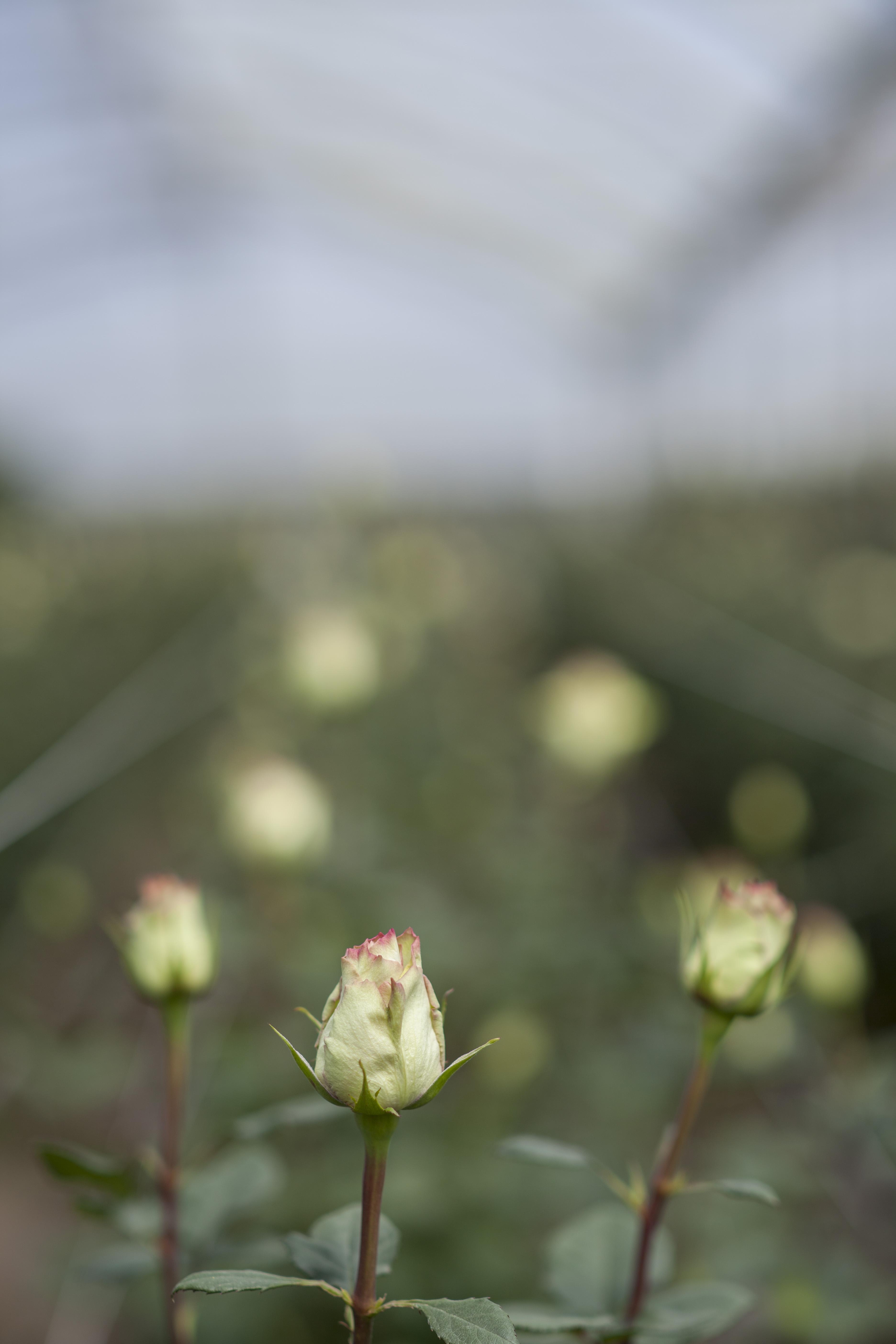 Harvest12.jpg