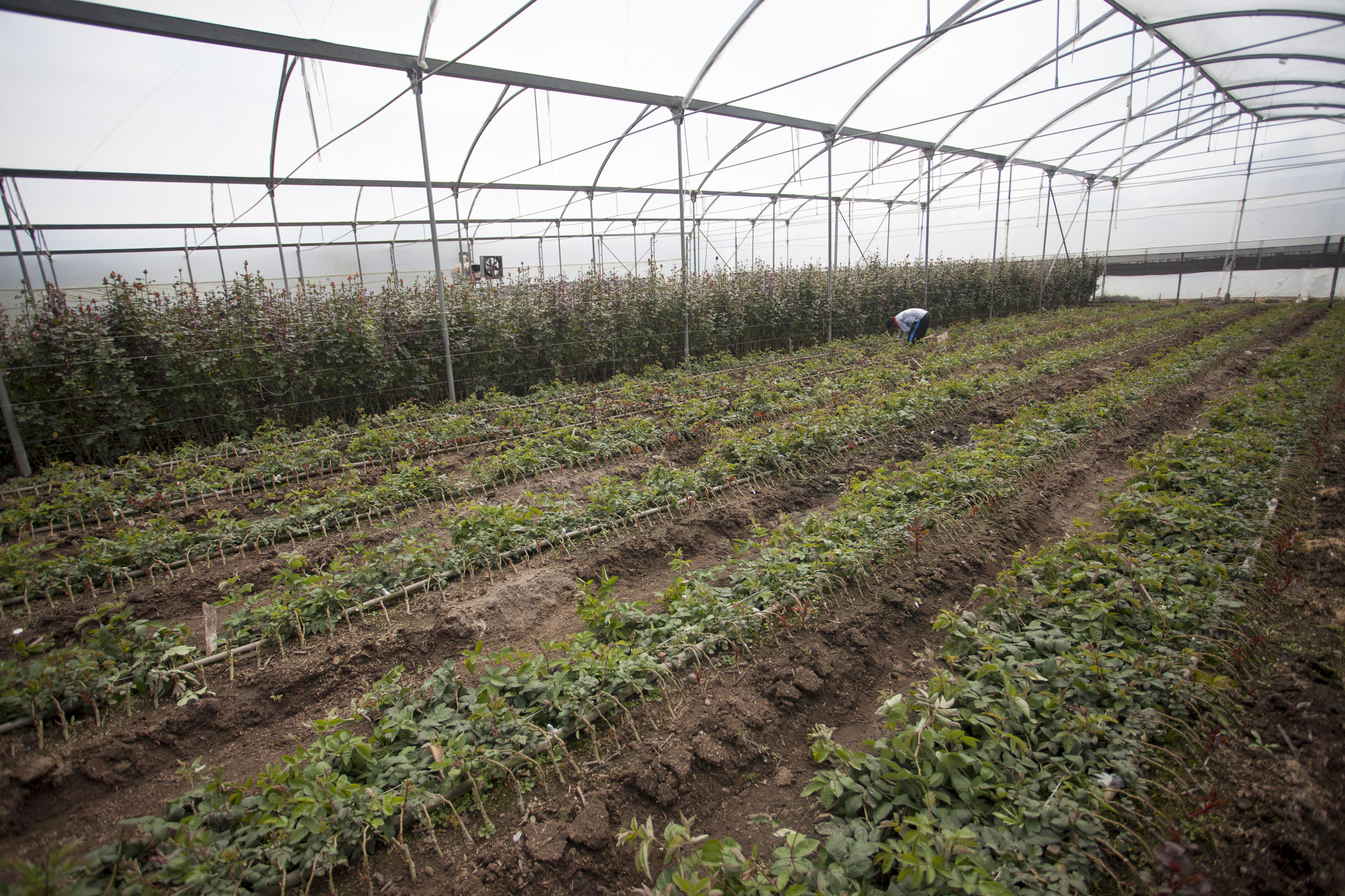 Harvest16.jpg