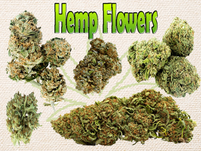 Hemp Flowers