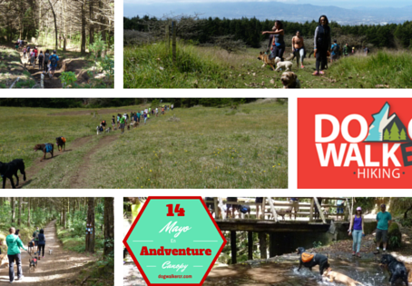 Próximo DogWalkerCR Hiking