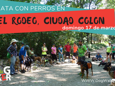 DogWalkerCR Hiking 17 marzo El Rodeo