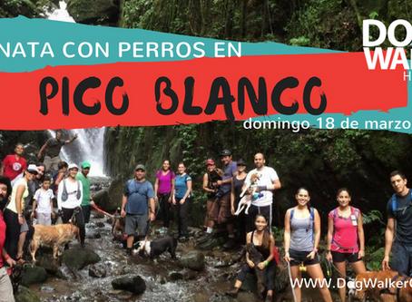 DogWalkerCR Hiking Pico Blanco