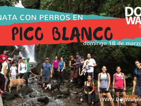 DogWalkerCR Hiking Pico Blanco