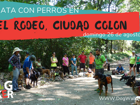 DogWalkerCR Hiking 26 agosto