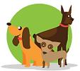 Caminadores de perros en Costa Rica
