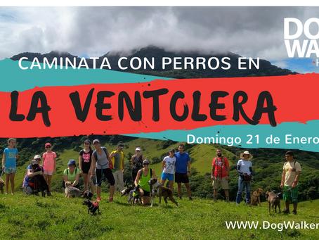 DogWalkerCR Hiking 21 Enero - La Ventolera.