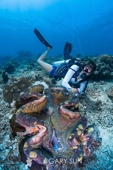 Diver with giant clam, Palawan, Philippines