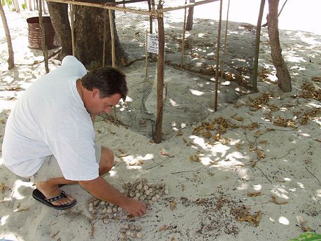 Turtle protection program, beach, Palawan, Philippines