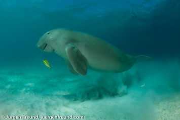 Dugong Diving Palawan, Philippines
