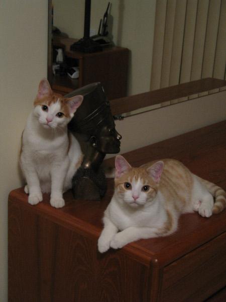 Simon (right) & Sophie (left)