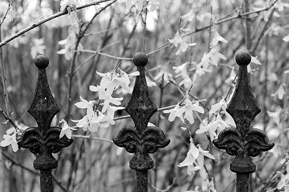 fence-1322396_1920.jpg