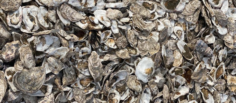 Aw shucks: Oysters in rural Georgia
