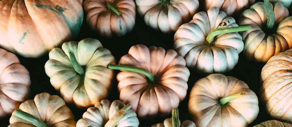 Pickin' pumpkins in rural Georgia