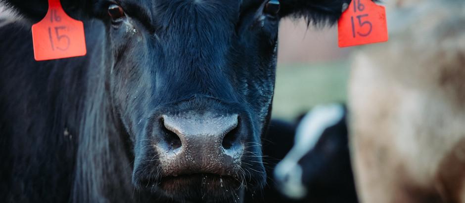Celebrating Beef Month in rural Georgia