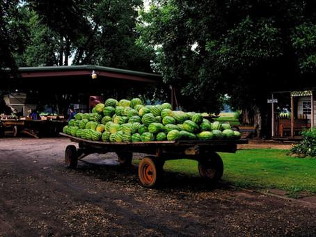 Celebrating National Fresh Fruit + Vegetable Month in rural Georgia