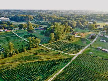 A touch of rural Georgia: Berry's Tree Farm & Nursery