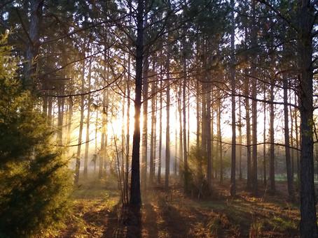 Growing in rural Georgia: Forestry