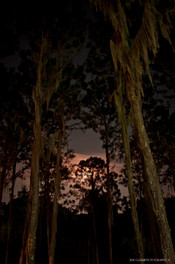 The Moon and the Trees
