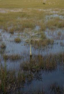 Everglades,FL