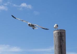 Birds in Tampa Bay