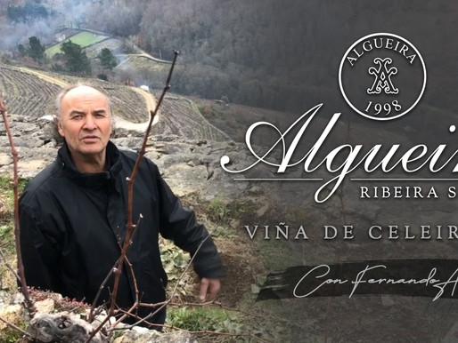 Viñedo Celeirón