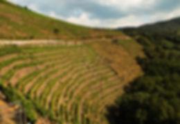 Algueira, Cortezada vineyard in Ribeira Sacra.