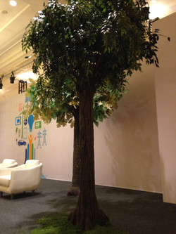 12ft Prop Trees Ritz at Key Biscayne