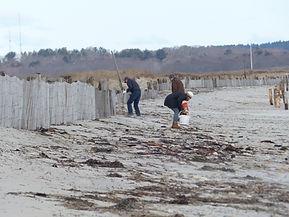 beach clean-up photo option2.JPG