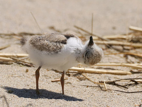 Growing up Plover: Post 3
