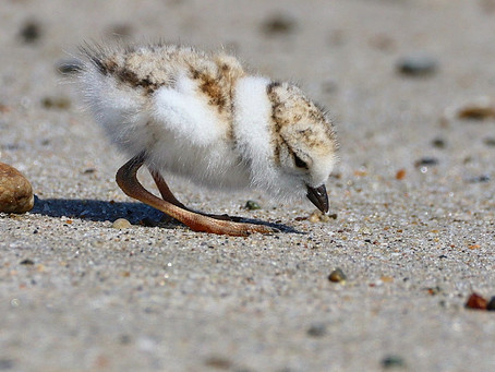 Growing up Plover: Post 2