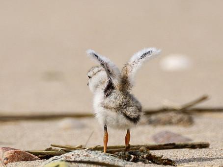 Coastal Ecology Program Series Post 2: Meet Andrew!