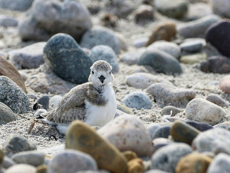 Growing up Plover: Post 5