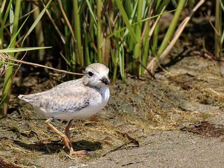 Growing up Plover: Post 6