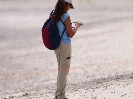 Summer Shorebird Monitors on Duxbury Beach
