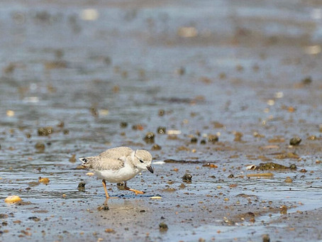 Growing up Plover: Post 4
