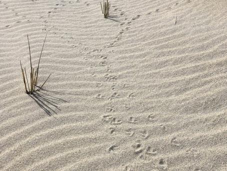Coastal Ecology Program Series Post 1: Meet Rory!