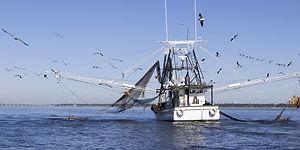 seafood-emergency_iStock-501604702-1130x