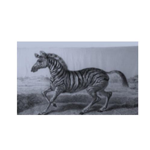 Zebra Printed Silk Scarf