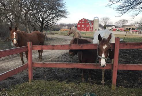 Full-size Horses