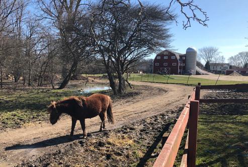 Big Pastures