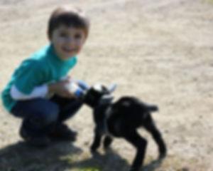 nathan-goat.jpg