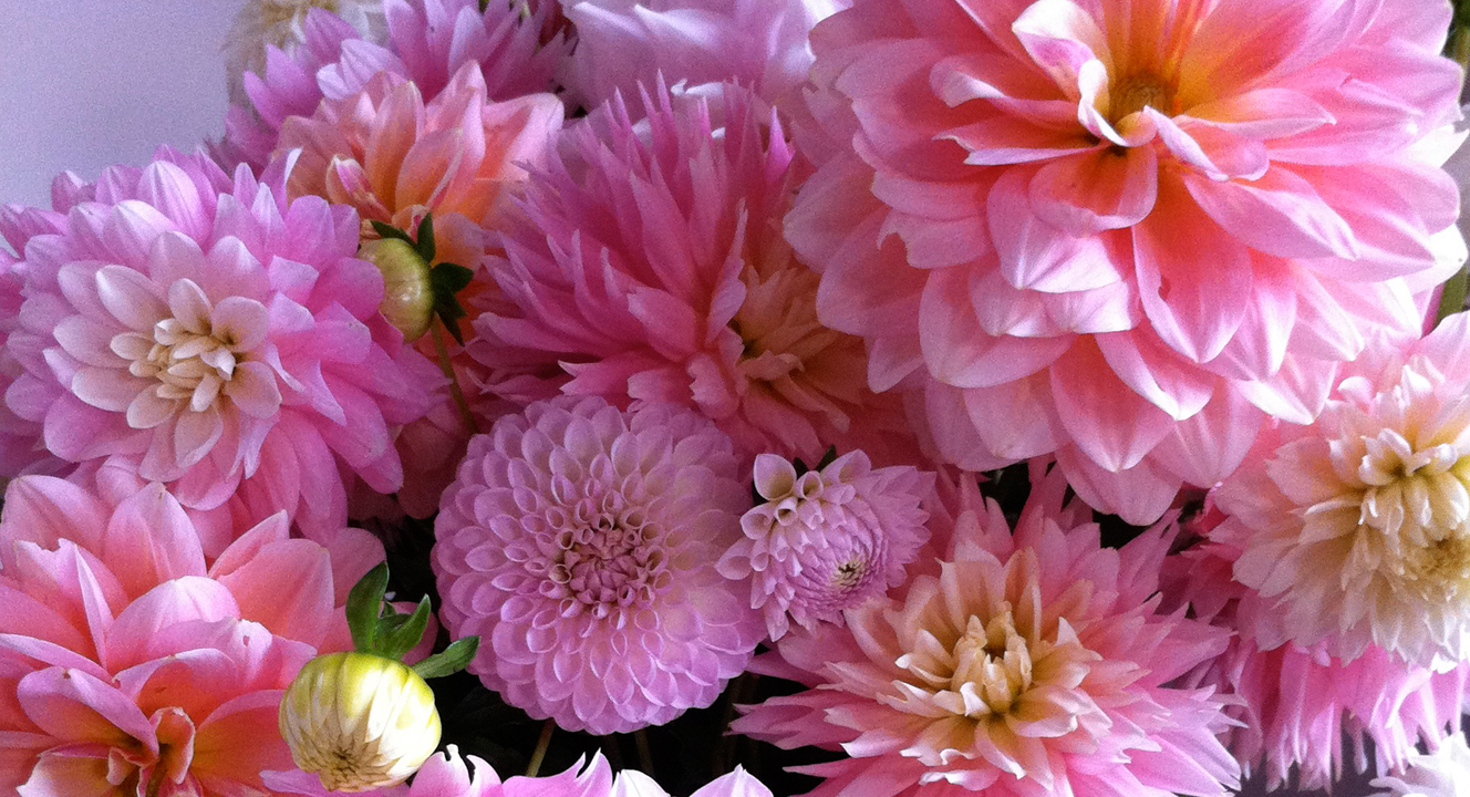 PinkBouquet.jpg