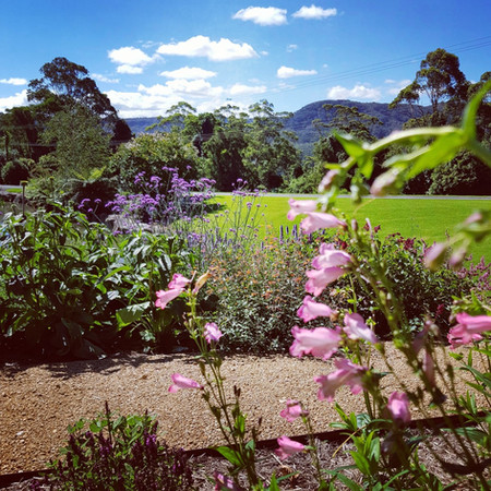 Flowering perennials (Penstemons and Salvias)