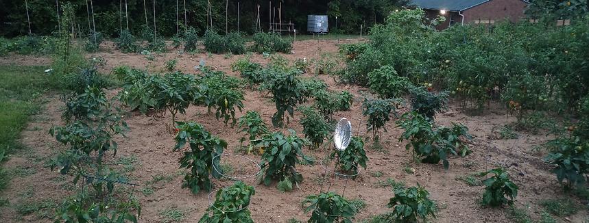 Community Garden 2019