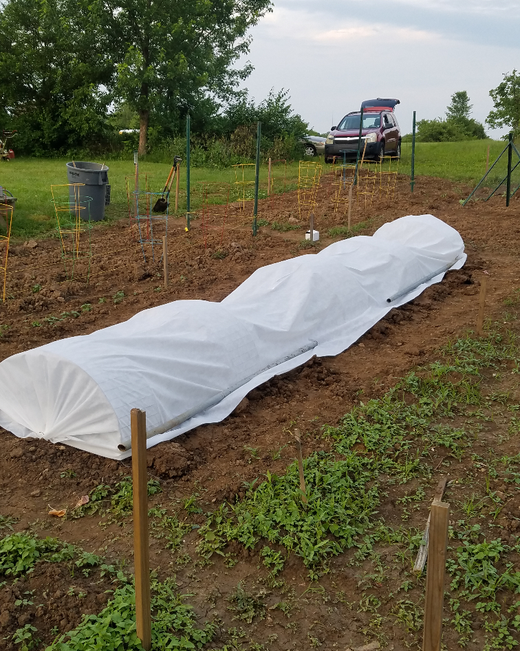 Communit Garden 2019