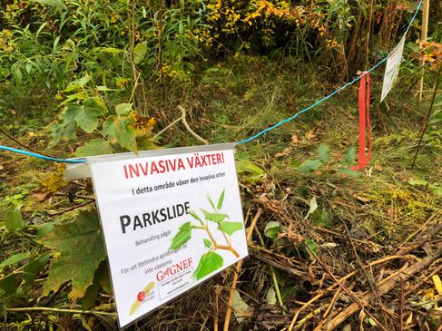 Informationsmaterial invasiva växter