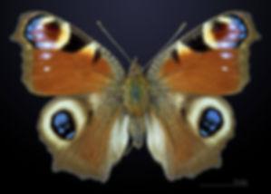 мягков бабочка.jpg
