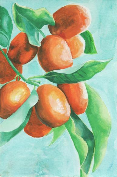 Kumquat Branch